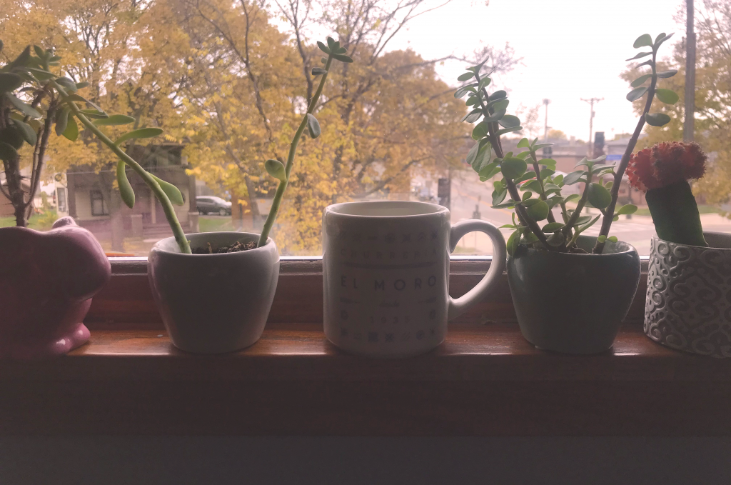 A coffee cup on a windowsill in the good company of small potted plants.